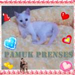 Pamuk-Prenses