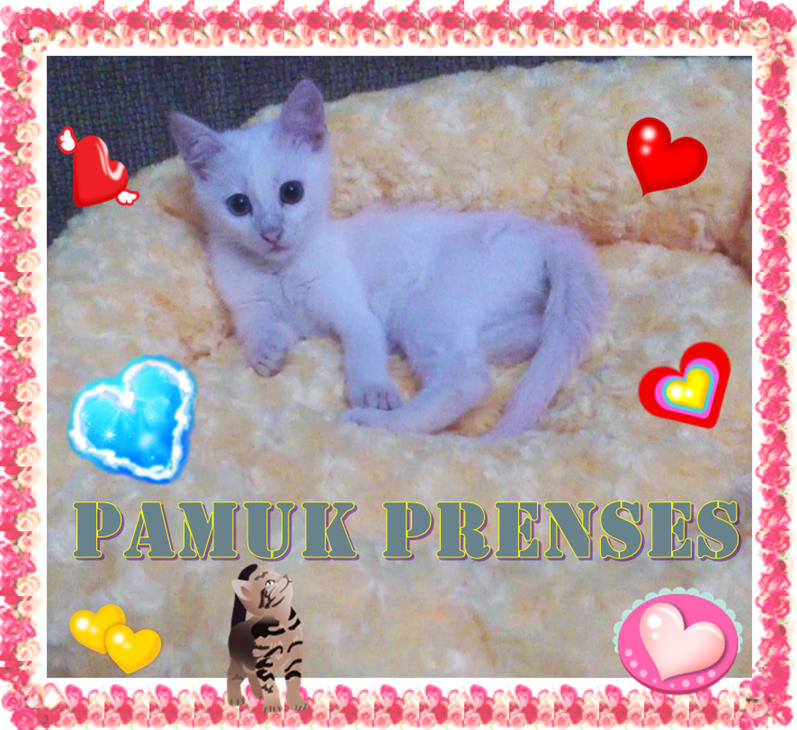 Kedim Pamuk Prenses / My Cat Snow White